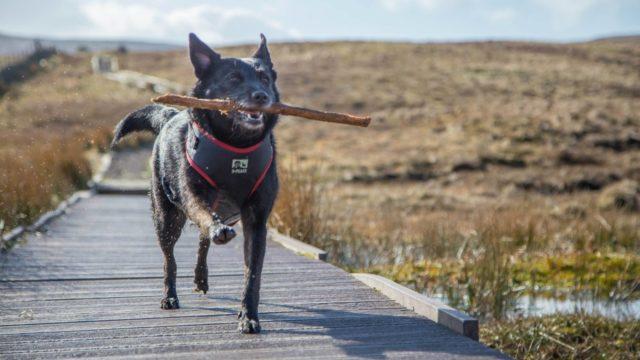 Dog walk at Windyhill