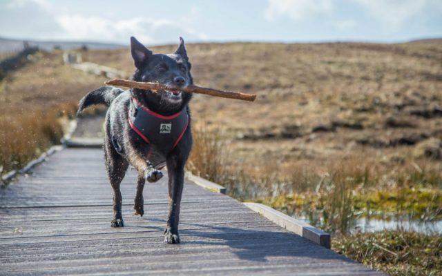 dog walk at windyhill walkiees rh walkiees co uk