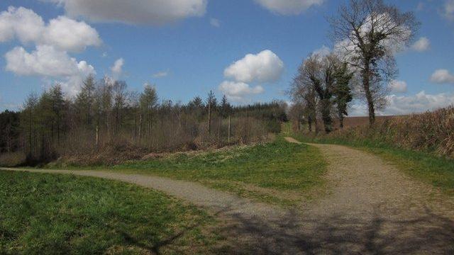 Dog walk at Winkleigh Wood