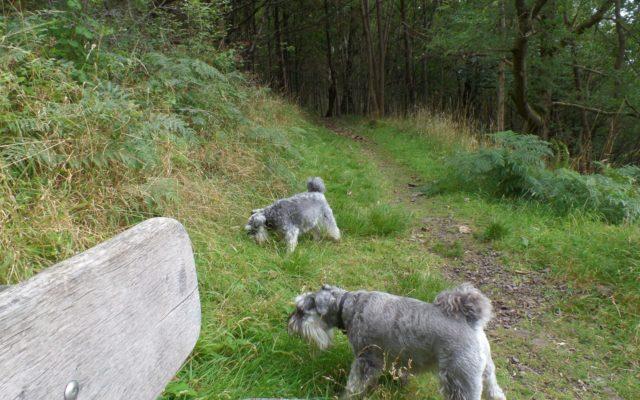 Woodhill Wood, Alva Dog walk in Clackmannanshire