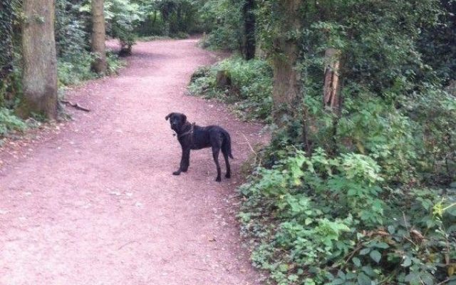 Worcester Woods Country Park Dog walk in Worcestershire