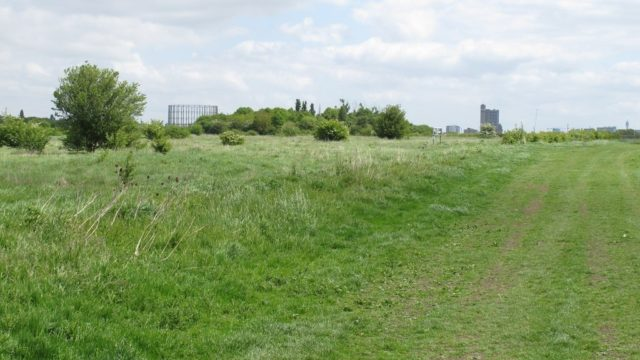Dog walk at Wormwood Scrubs