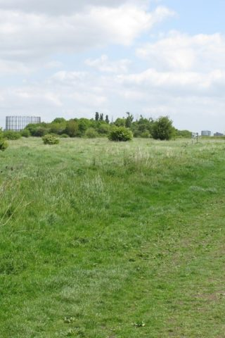 Dog walk at Wormwood Scrubs photo