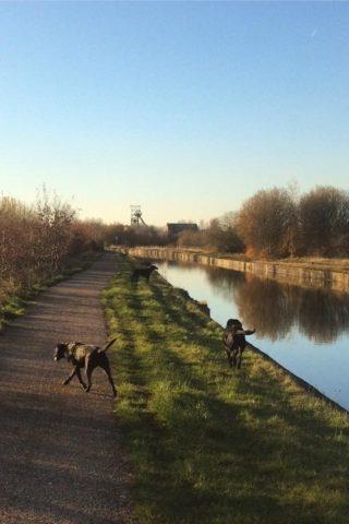 Dog walk at Worsley To Pennington Flash photo