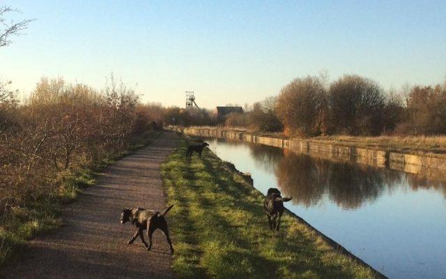 Worsley To Pennington Flash Dog walk in Lancashire