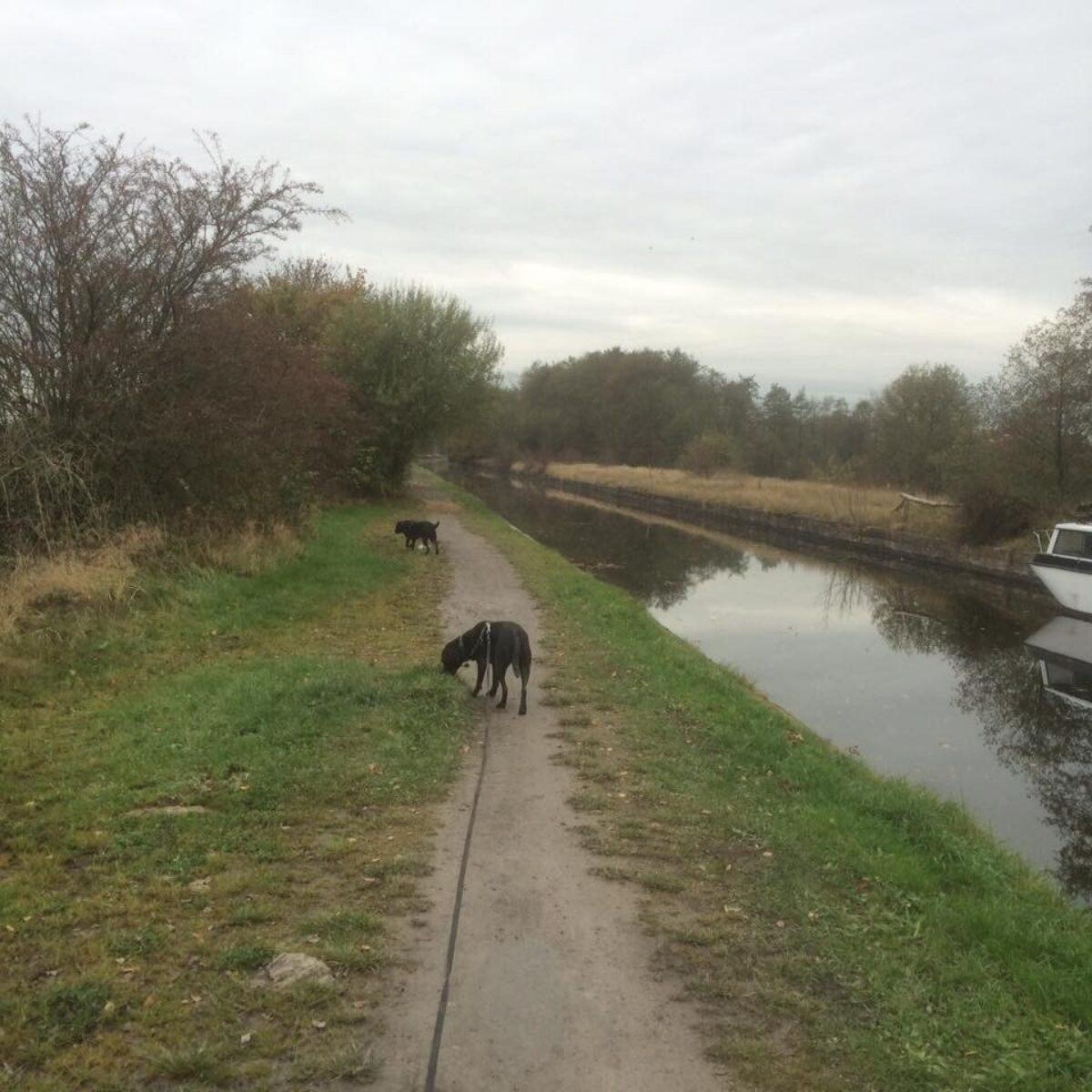 Worsley To Pennington Flash large photo 3