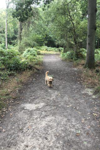 Dog walk at Wrabness Woods photo
