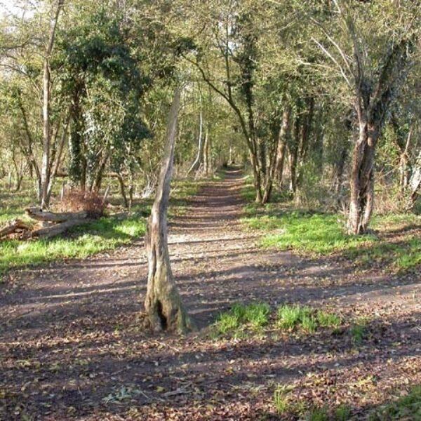 Dog walk at Wymington Spinney