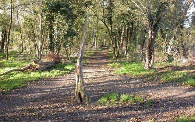 Wymington Spinney Dog walk in Northamptonshire