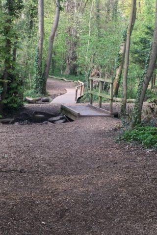 Dog walk at Wymondley Wood photo