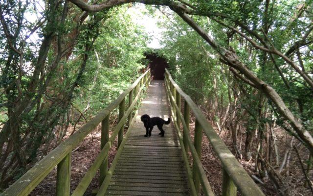 Wytch Heath, Wareham, Dorset Dog walk in Dorset