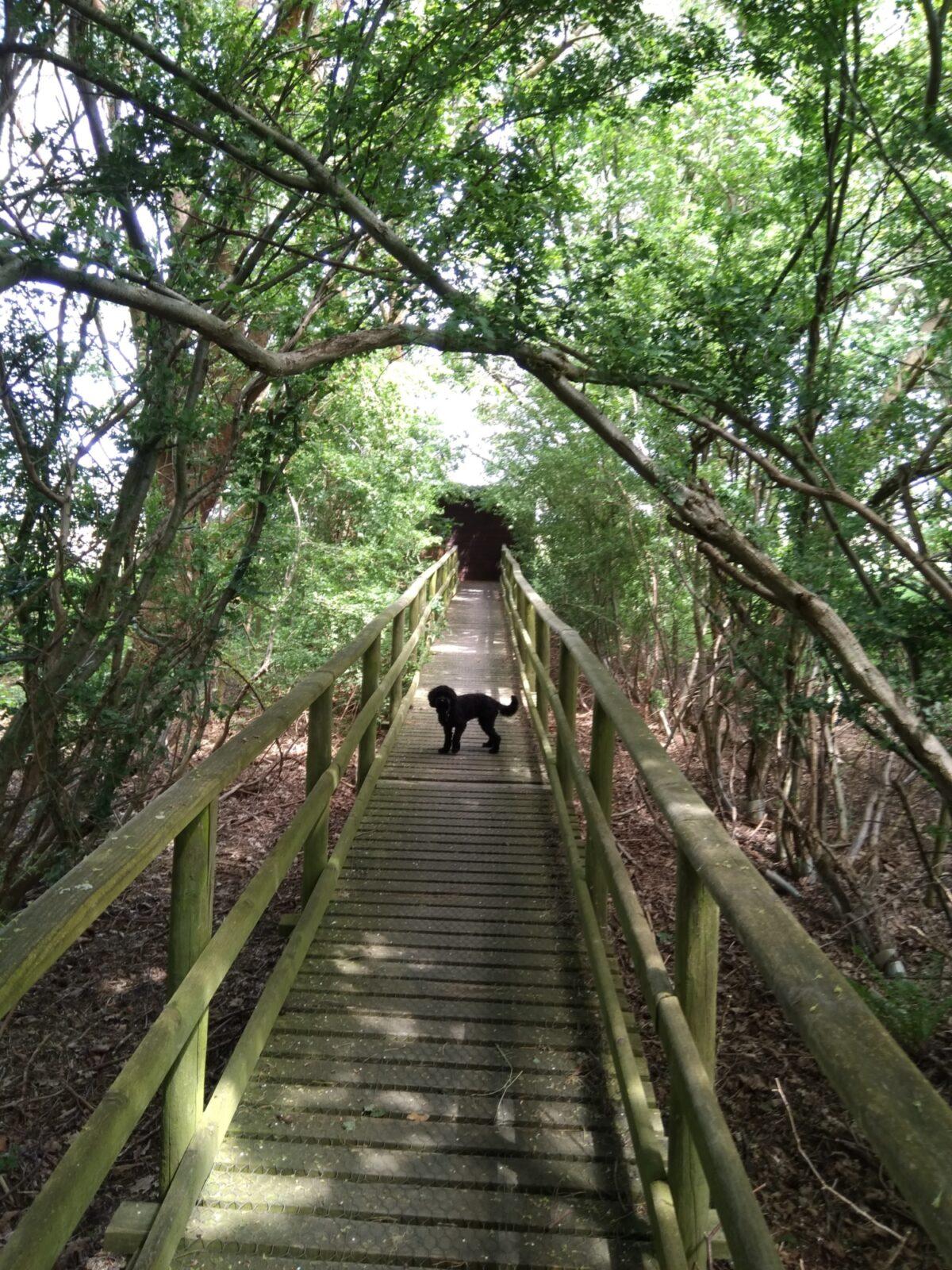 Wytch Heath, Wareham, Dorset large photo 3