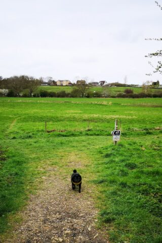 Dog walk at Yarwell Mill and Nene Valley photo