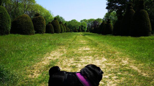 Dog walk at Yew Tree Avenue