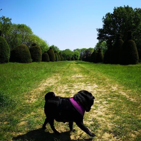Yew Tree Avenue photo 1
