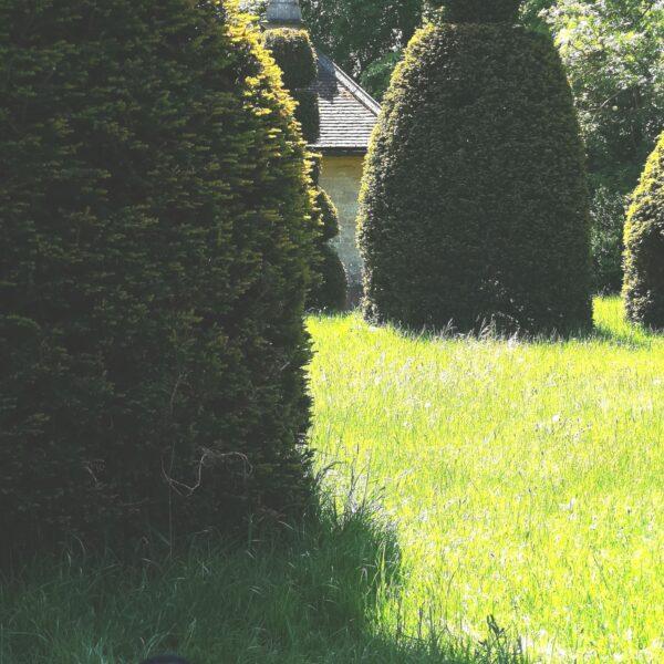 Yew Tree Avenue photo 3