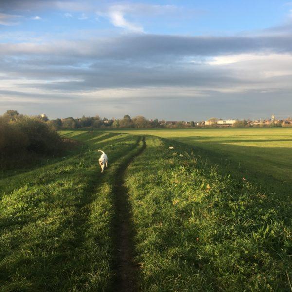 Dog walk at York River Walk/Clifton Ings