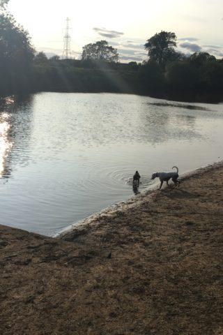 Dog walk at York River Walk/Clifton Ings photo