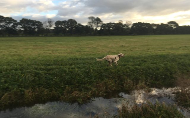 York River Walk/Clifton Ings Dog walk in Yorkshire (North)
